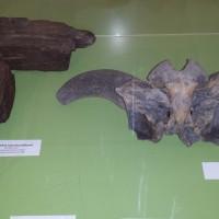 expositie ulrum (5)