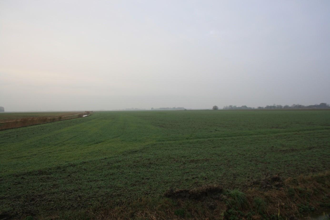 Jonge tarwe op één van de akkers waar Romeinse vondsten zijn gedaan. Zo komen twee opvallende aspecten aan de vroegste geschiedenis van Firdgum samen.