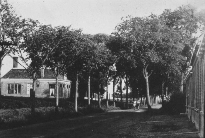 Bomen in bermen Camstrawei