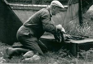 eelke-hoekstra-was-de-24ste-kooiker-van-de-eendenkooi-bij-de-hel-hij-heeft-hier-van-1977-tot-1998-zijn-vak-uit-kunnen-oefenen