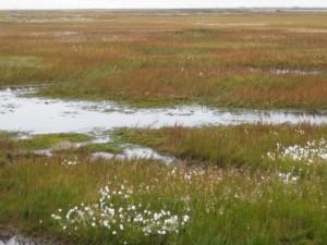 landschap-zoals-het-eruit-gezien-zal-hebben-in-de-laatste-ijstijd